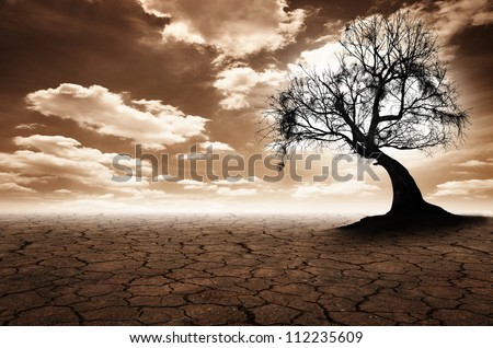 Lonely dead tree. Art nature