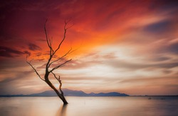 Lonely dead tree. Art nature and sunset
