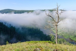 Lonely dead tree on the background of morning mist hanging over Belaya river valley. Bashkiria national park, Bashkortostan, Russia.