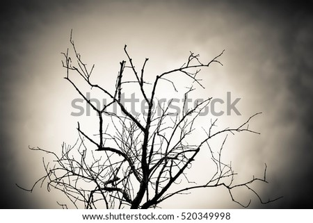 Shutterstock Lonely dead tree, Silhouette dead tree,Abstract nature background