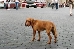 lonely dog in city