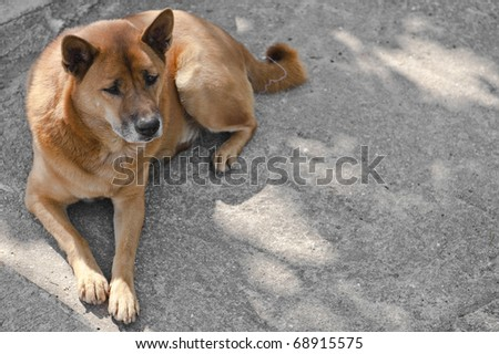 Lonely dog lying on the road