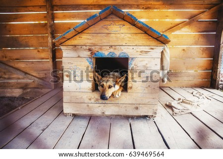 Lonely dog watching out of his kennel #639469564