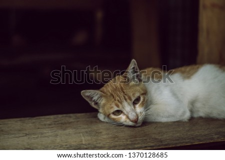 Lonely Domestic Cat #1370128685