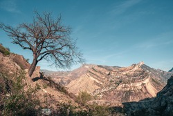 Lonely dry tree nearby on the cliff. The Gunib plateau in Dagestan.