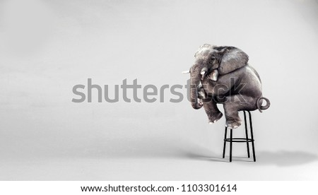 lonely elephant sitting in minimalist room #1103301614
