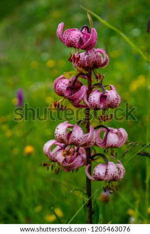 Lonely flower in the field #1205463076