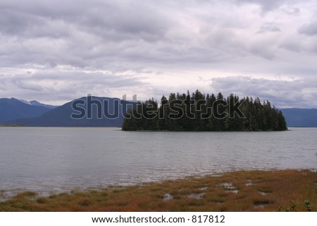 Lonely forest in Alaska