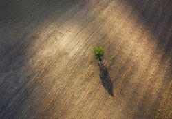 Lonely green tree top aerial view on the plowed field with picturesque evening sunlight spots with gradually light-shadow playing textures. Beauty in nature concept image.