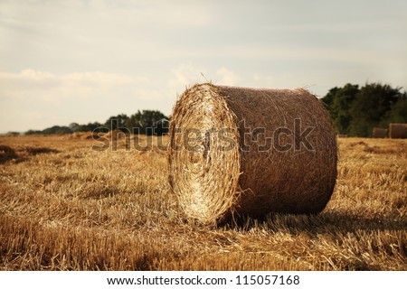 lonely hay roll in summer field