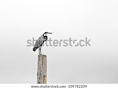 Lonely heron sitting on concrete pole
