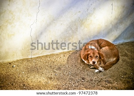 Lonely homeless dog