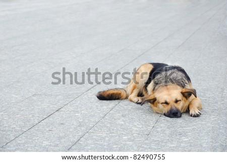 Lonely homeless dog sleeping on the sidewalk