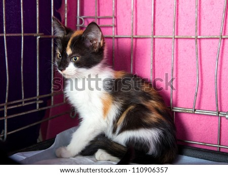 Lonely Homeless Kitten in a Cage in the Animal Shelter