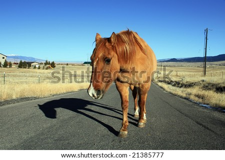 Lonely Horse on a country road