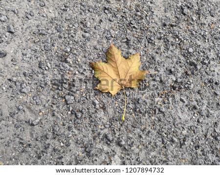 lonely leaf on gravel #1207894732