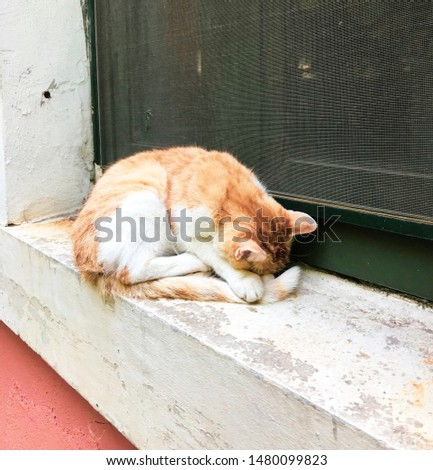 lonely little kitty sleeping on the sill #1480099823