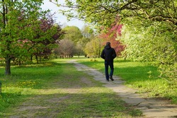 lonely man at the spring walk