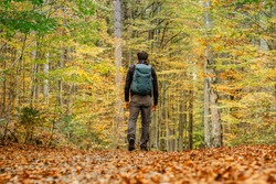 Lonely man walking in a forest path.Autumn season.Solo outdoor sport. Social distance. Active backpacker hiking in colorful nature. Warm sunny day in the fall. Bright yellow and orange fall colors