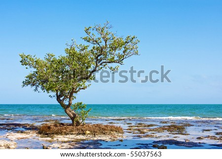 Lonely Mangrove tree