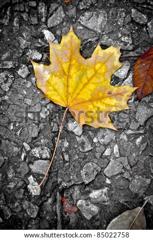 Lonely maple leaf on the ground. Conceptual picture.