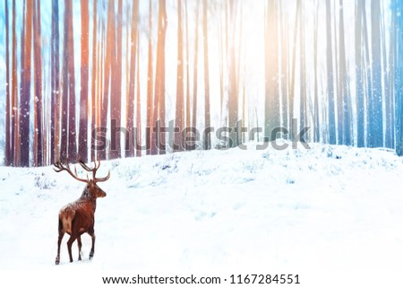 Lonely noble deer against winter fairy forest. Snowfall. Winter Christmas holiday image.