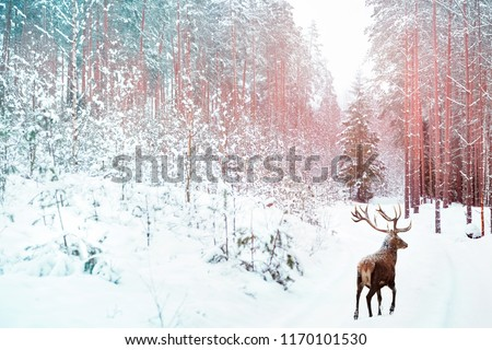 Lonely noble deer against winter fairy forest. Winter Christmas holiday image. Image toned in pink and blue color.
