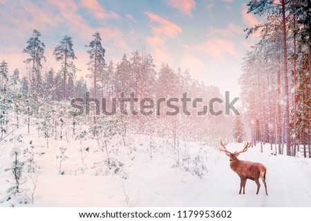 Lonely noble deer mail with big horns against winter fairy forest against sunset. Winter Christmas holiday image.