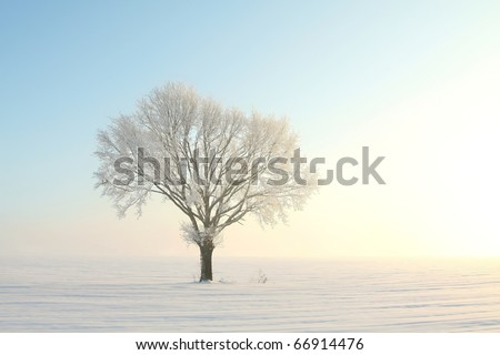 Lonely oak tree covered with frost at dawn. Photo taken in December.