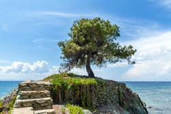 Lonely olive tree on the rock in the sea background