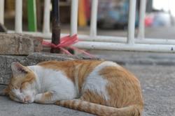 Lonely Orange Cat Sleeping on The Road