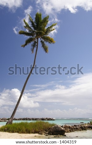 Lonely palm at a caribbean beach