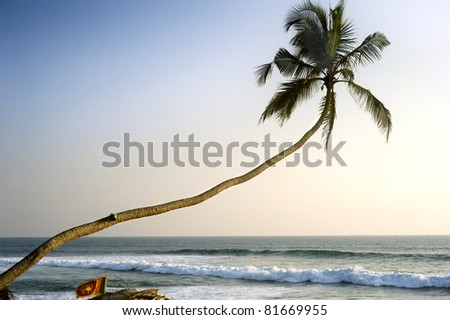 Lonely palm tree at sunset in front of Indian ocean. Sri Lanka