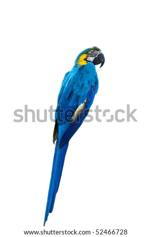 lonely parrot bird in white isolated background