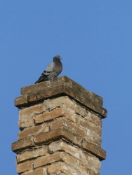Lonely pigeon standing on the chimney made of bricks, against blue sky