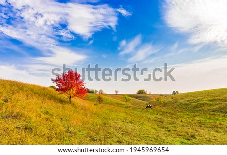 Lonely red autumn tree on hill valley landscape. Red autumn tree foliage. Lonely autumn tree in field