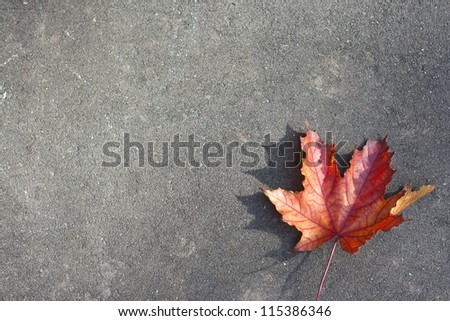 Lonely red leaf on the ground