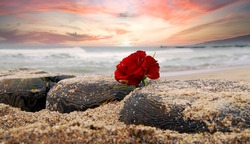 Lonely Red rose flower at beach of Ocean against dramatic sky. Burial at sea concept. symbol of Funeral flower and Covid-19 Mourn during pandemic. Condolence card concept. Copy space for text