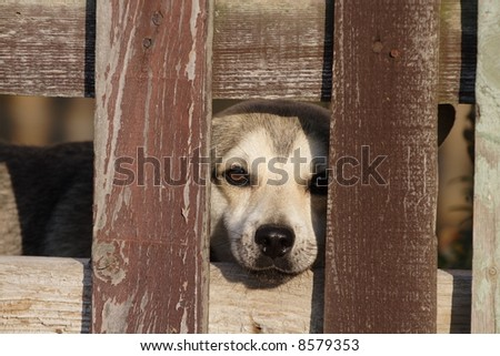 lonely sad dog behind a fence
