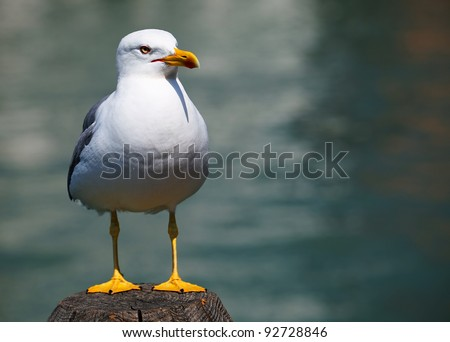 Lonely seagull in Venice, Italy