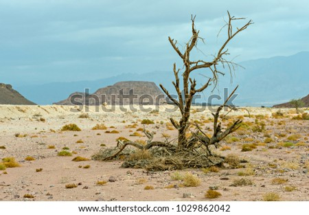 Lonely snag in geological Timna park that is located 25 km north of Eilat and combines beautiful scenery with unique geology, variety of sport and family activities #1029862042