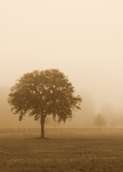Lonely solitary tree in an open grassy field meadow pasture in the fog looking empty dismal depressing desolate bleak stark grim dramatic moody drab dim dull with sepia retro vintage filter
