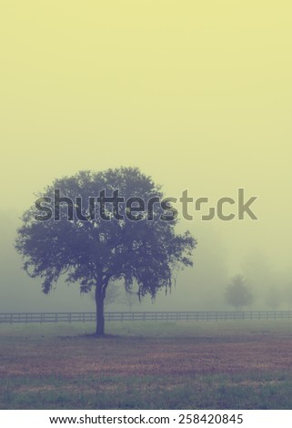 Lonely solitary tree in an open grassy field meadow pasture in the fog looking empty dismal depressing desolate bleak stark grim dramatic moody drab dim dull with retro vintage filter