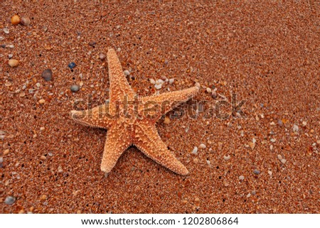 Lonely starfish lying on sand as tourist sunbathing, copy space #1202806864