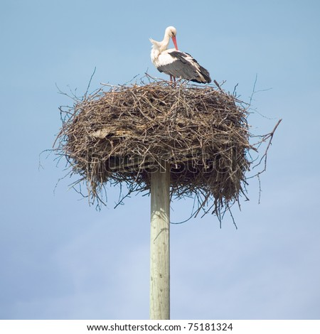 Lonely stork waiting in the nest - stock photo