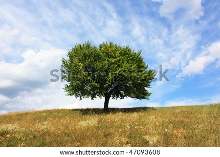 lonely summer tree