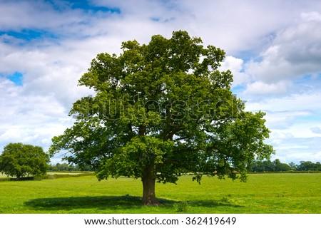 lonely tree #362419649