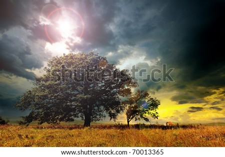 Lonely tree against a blue sky at sunset.