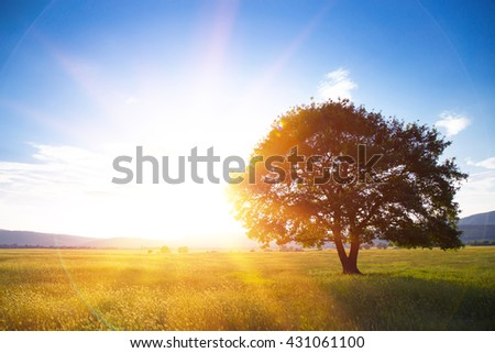 Stock Photo Lonely tree against a blue sky at sunset. summer landscape with a lone tree at sunset barley field in the village