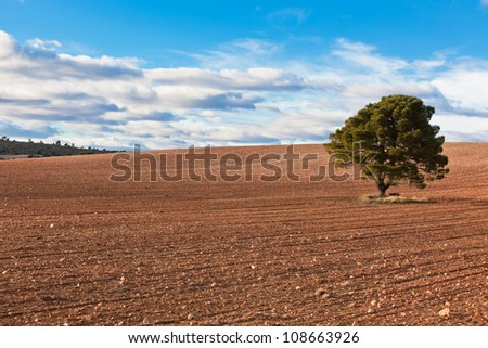 Lonely tree against blue sky with clouds and cultivated field.